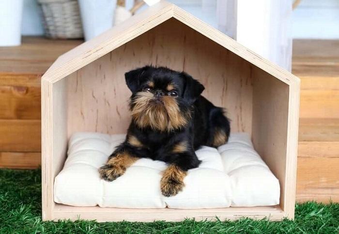 casinha de madeira pequena para cachorro.